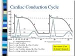 cardiac conduction cycle