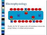 electrophysiology9