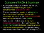 oxidation of nadh succinate