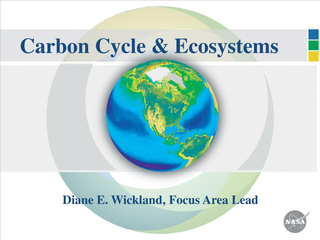 carbon cycle ecosystems l.