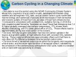 carbon cycling in a changing climate