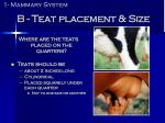 b teat placement size