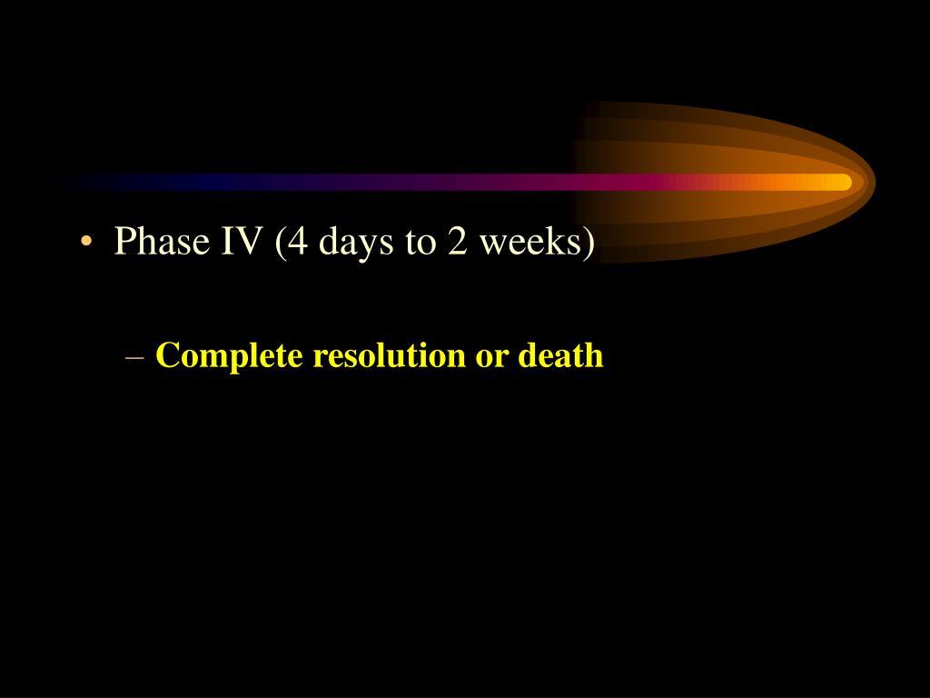 Phase IV (4 days to 2 weeks)