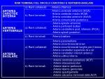 rami terminali del circolo carotideo e vertebro basilare