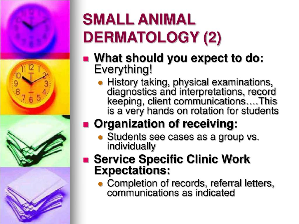 SMALL ANIMAL DERMATOLOGY (2)