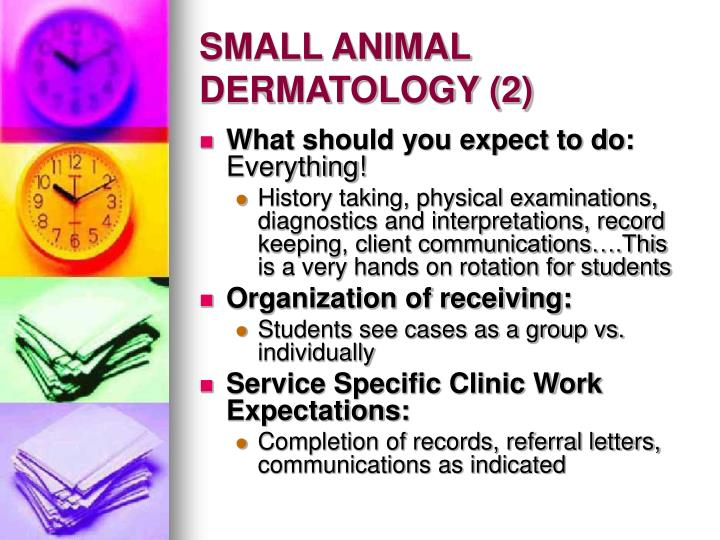 Small animal dermatology 2
