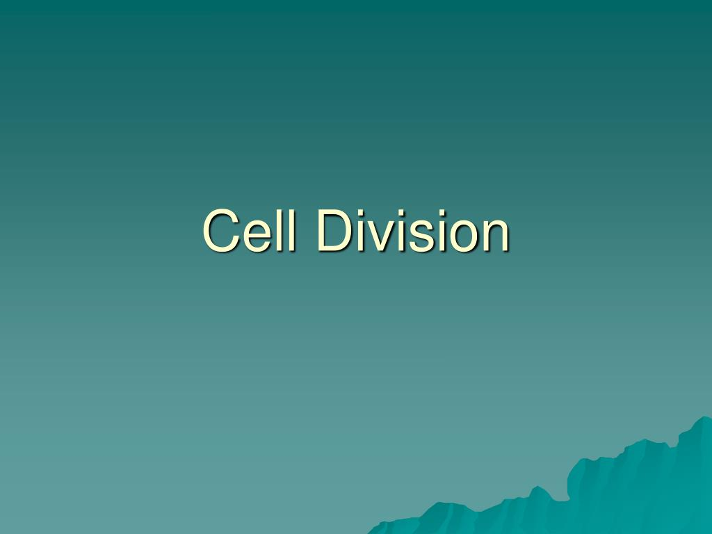 cell division l.