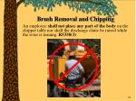 brush removal and chipping58