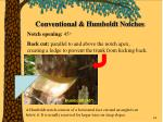 conventional humboldt notches