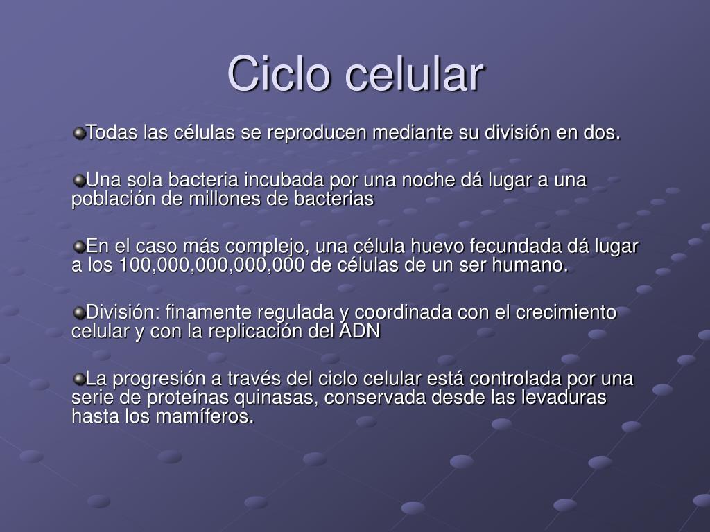 ciclo celular l.