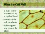 what is a cell wall
