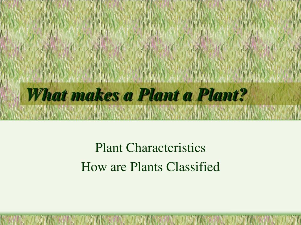 what makes a plant a plant l.