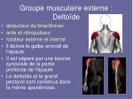 groupe musculaire externe delto de