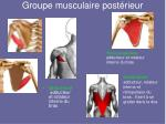 groupe musculaire post rieur6