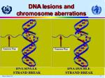 dna l esions and c hromosome a berrations