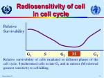 radiosensitivity of c ell in c ell c ycle