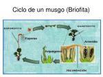 ciclo de un musgo briofita