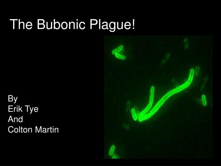 the bubonic plague n.