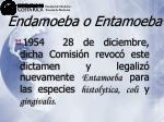 endamoeba o entamoeba17