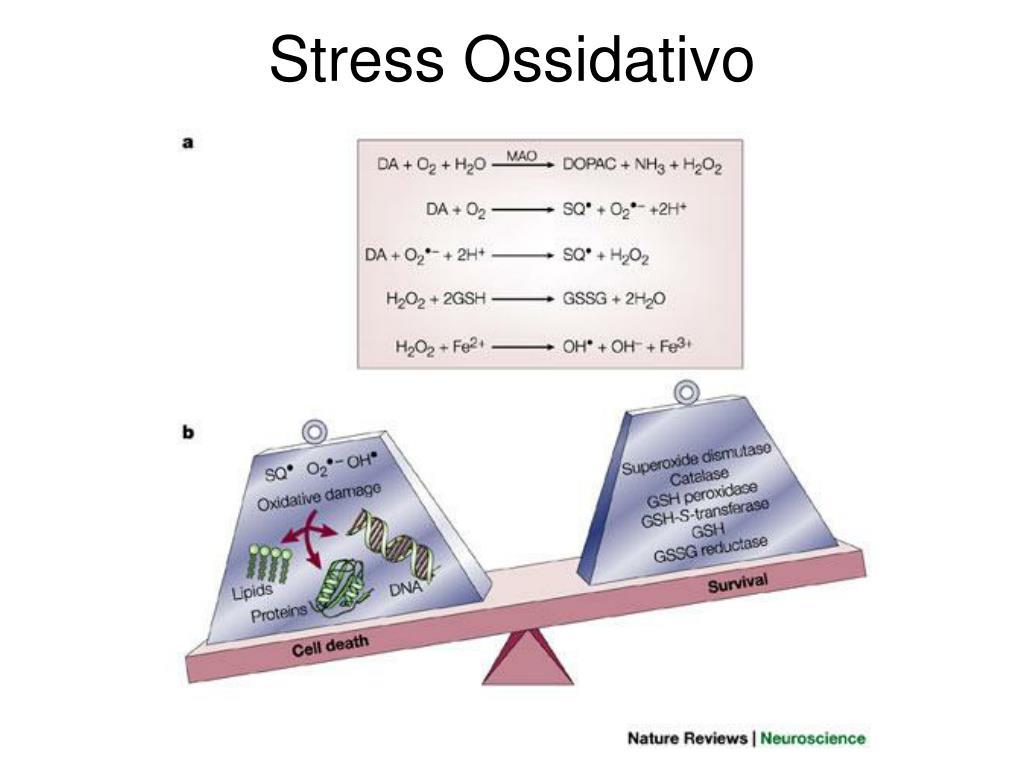 stress ossidativo l.