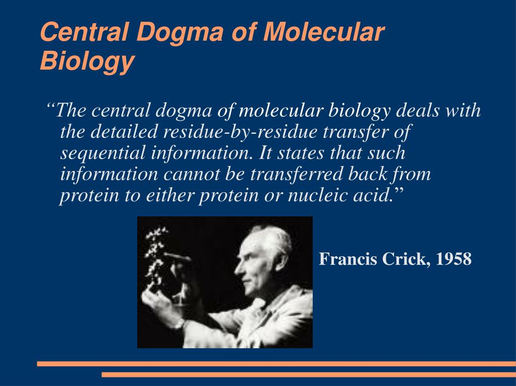 central dogma of molecular biology l.