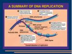 dna replication12