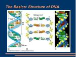 the basics structure of dna