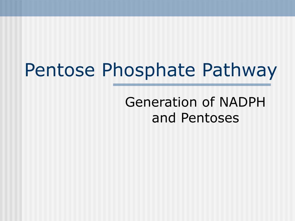 pentose phosphate pathway l.