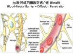 detail blood neural barrier diffusion penetration