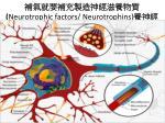 neurotrophic factors neurotrophins