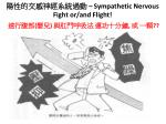sympathetic nervous fight or and flight