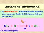 celulas heterotroficas31
