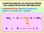 clasificacion de las celulas seg n sus caracteristicas metabolicas26