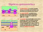 hip tesis quimiosm tica