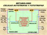 metabolismo celulas autotrofas y fototrofas