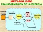 metabolismo transformacion de la energia