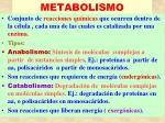 metabolismo21