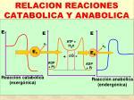 relacion reaciones catabolica y anabolica