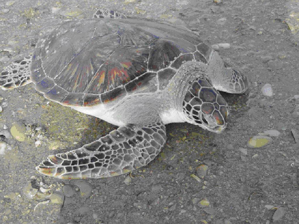 history of sea turtle populations in the sultanate of oman l.