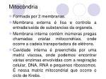 mitoc ndria