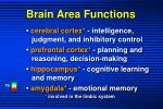 brain area functions