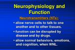 neurophysiology and function