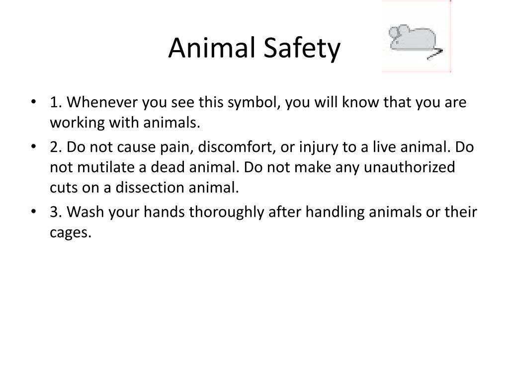 Animal Safety