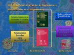 estructura actual de la familia de clasificaciones internacionales de la oms oms fic