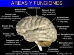 areas y funciones