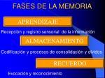 fases de la memoria