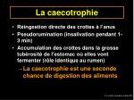 la caecotrophie