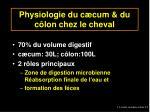 physiologie du c cum du c lon chez le cheval