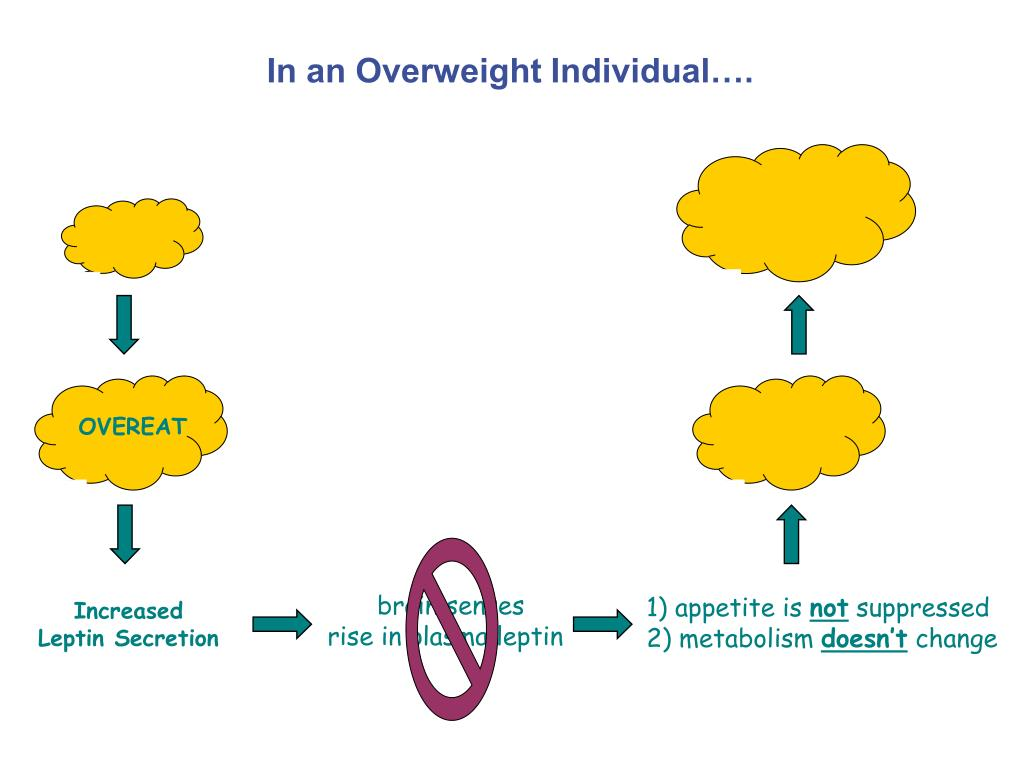 In an Overweight Individual….