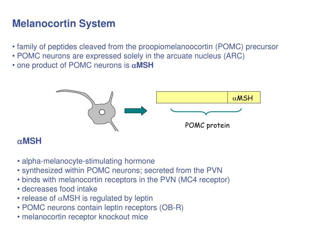 Melanocortin System
